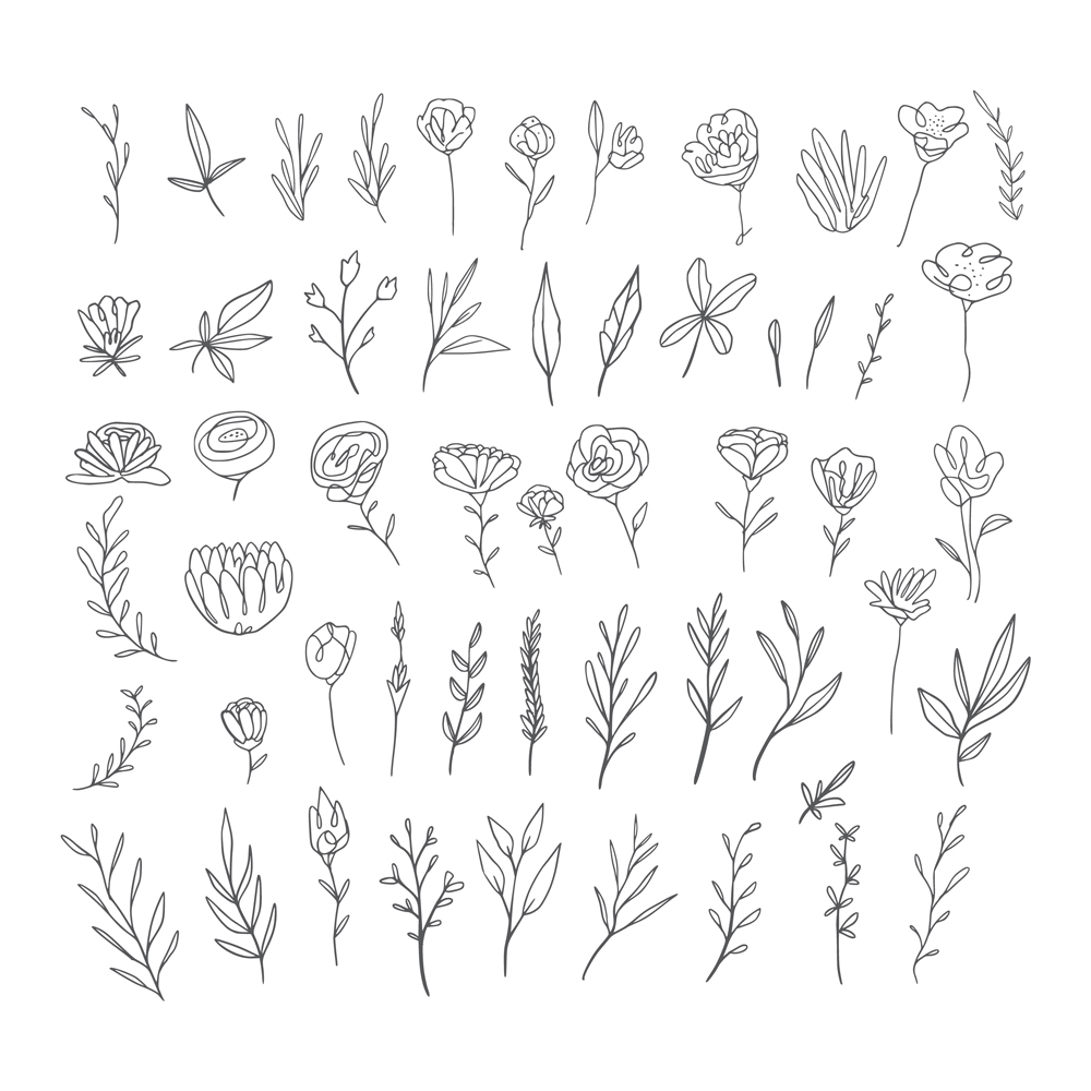 Hand drawn botanical elements collection