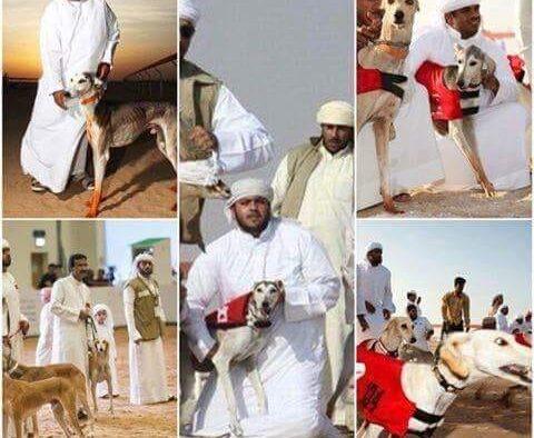 Benarkah Muslim di Arab Saudi Gemar Mainan Anjing?