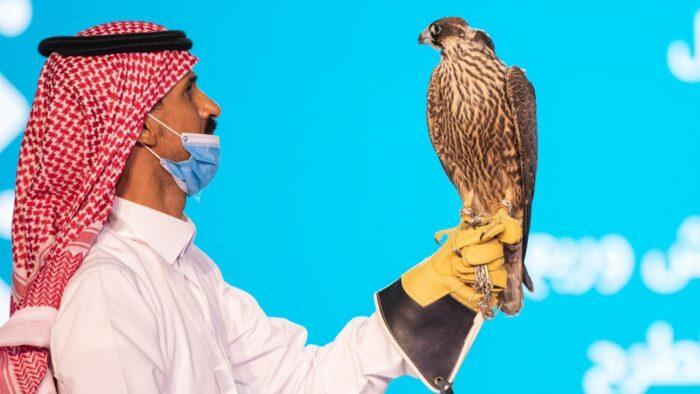 Lelang Elang di Saudi, Harganya Capai Milyaran Rupiah