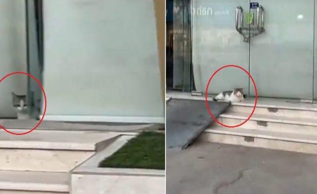 Reaksi Seekor Kucing Setelah Anaknya Terkurung di Sebuah Toko Yang Ditutup Baladiyah Al-Hofuf di Al-Ahsa